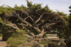 ławki parku Zdjęcie Royalty Free
