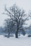 ławki zima Fotografia Royalty Free