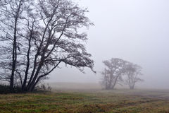 Awl trees in the fog. Stock Images