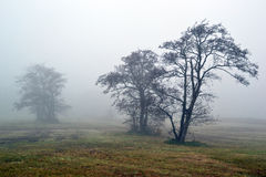 Awl trees in the fog. Royalty Free Stock Images