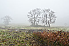 Awl trees in the fog. Stock Image