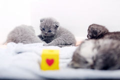 Awsome最近出生的小猫 免版税库存照片