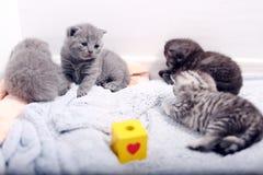 Awsome最近出生的小猫 图库摄影