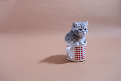 Awsome kitten in a mug Royalty Free Stock Photos