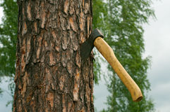 An ax and chopped wood Stock Image