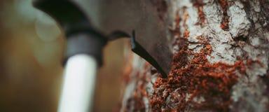 Ax stuck into a birch closeup stock photos
