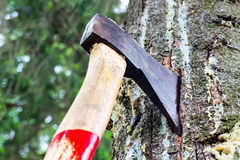 An ax is stuck in a tree in the forest Stock Images
