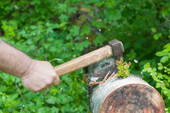 Ax stuck in tree. Ax held by a human hand stuck in the fallen tree royalty free stock photo