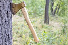 Ax thrust into the trunk. Of a tree in the forest Royalty Free Stock Image