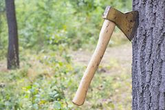 Ax thrust into the trunk. Of a tree in the forest Stock Images