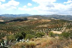 Axarquia countryside, Andalusia, Spain. Olive groves and mountains, between Rio Gordo and Periana, Axarquia region, Malaga Province, Andalusia, Spain, Western Stock Images