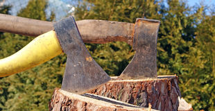 Axe With Chopped Wood. A woodsman's axe, at rest in a block of wood, which is in front of a large pile of cut logs Stock Photo