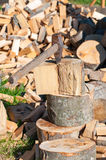 Axe in Chopping Block and Firewood. Ax pile of Royalty Free Stock Photography