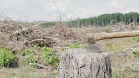 Deforestation, the axe on the stump