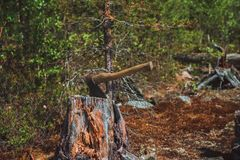 The axe stuck. Axe and wood. A sun bleached axe stuck in a block of wood. The axe stuck in a log on the background of green forest royalty free stock image