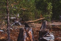 The axe stuck. Axe and wood. A sun bleached axe stuck in a block of wood. The axe stuck in a log on the background of green forest stock images