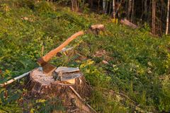 Axe in stump. Deforestation Royalty Free Stock Image