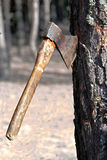 Axe in the tree Royalty Free Stock Photos