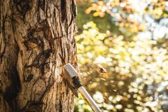 Axe in tree Stock Images