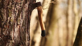 Axe unexpectedly get into tree trunk carving a lot of chips Stock Images