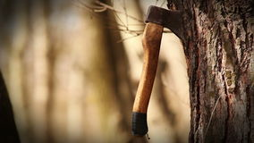Axe unexpectedly gets into tree trunk carving a lot of chips stock footage