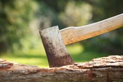 Axe in wood. Closeup of a single bit axe with hickory handle Royalty Free Stock Image