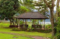 Axel i thickets av tropiska växter Arkivfoton