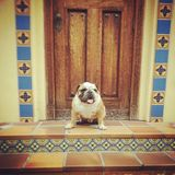 Axel vor einer Tür Lizenzfreies Stockfoto