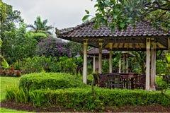 axeln planterar tropiska thickets Arkivfoto