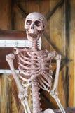Axiellt skelett och blod med att le Royaltyfria Foton