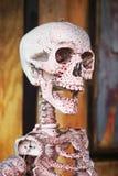 Axiellt skelett och blod med att le Arkivbilder