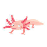 Axolotl mexican salamander cartoon character. royalty free illustration
