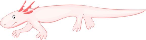 Axolotl (Mexican salamander) Stock Photos