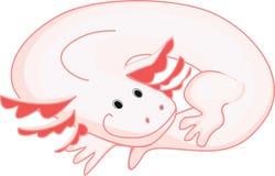 Axolotl (Mexican salamander) Stock Images