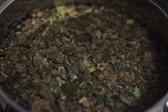 Ayahuasca Guayusa tea leaves from amazon rainforest, preparation brewing in a kettle close-up