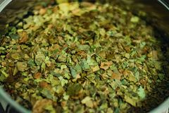 Ayahuasca Guayusa tea leaves from amazon rainforest, preparation brewing in a kettle, close-up