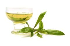 Ayapana medicinal plant Stock Photo