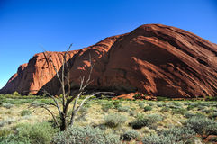 Ayers Rock. The Ayers Rock in the afternoon during the rain season Stock Images