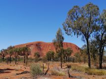 Ayers rock with desert oaks Royalty Free Stock Photo