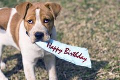 Ayez un joyeux anniversaire Images libres de droits