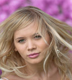 aygul ροζ Στοκ εικόνα με δικαίωμα ελεύθερης χρήσης