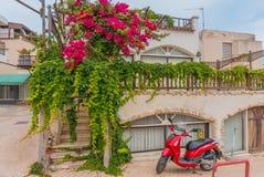 Ayia Napa, Cyprus - 02 02 2018: Kleurrijke scène op de straten van de toevluchtstad op een de zomerdag Magnolia met weelderige bl royalty-vrije stock foto's