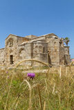 Ayios Filon gå i ax den medeltida kyrkan bak taggen och korn, Cypern Arkivbilder
