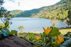 Ayote цветет в ¡ n de Ipala Volcà стоковая фотография rf