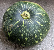 Ayote, Sita phal. Cucucurbita moschata, Ayote Squash is a tough skinned rounded to oblong squash, known as Calabaza or Auyama. In India it is most commonly grown stock image