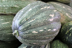 Ayote squash. Kadu, Cucurbita moschata, globose to oblong fruit with tough green skin with yellowish-white spots, turning brown when mature Flesh is initially stock images