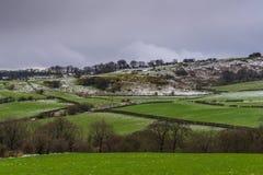 Ayrshire-Rind Abhang mit Hecken u. hellem Pulver des Schnees Stockbild