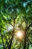 Ays de Sun brillant par des arbres, fond de nature/phot vertical images stock