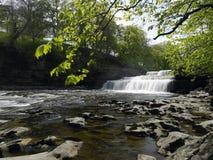 Aysgarth baja - Wensleydale - los valles de Yorkshire imagen de archivo libre de regalías