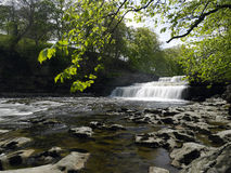 Aysgarth Falls - Wensleydale - Yorkshire Dales Royalty Free Stock Image